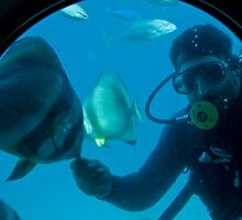 Egypt. Hurghada. Red Sea. Feeding the Fish. by vadim19