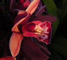 Orchid Red by Henry Murray