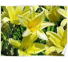 Yellow Lillies Poster