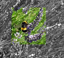 Busy little bumble bee by Deborah Clearwater