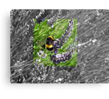Busy little bumble bee Metal Print