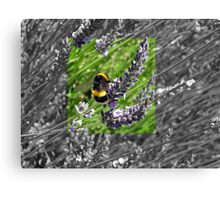 Busy little bumble bee Canvas Print