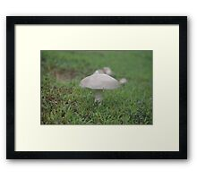Fungus For The Ages Framed Print