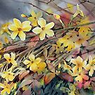 Winter Jasmine by Ann Mortimer