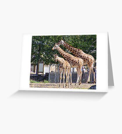 Giraffes - Chester Zoo Greeting Card