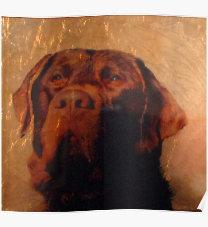 Proud Hunting Dog on Copper Poster