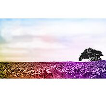 Colorful retro field photo Photographic Print