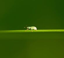 Little cute bug on grass by Amaviael