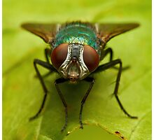 Beautiful fly on the grass over green background Photographic Print
