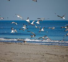 Seagulls and more Seagulls by imagetj