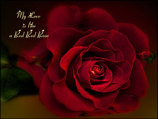 your love is like a red red rose