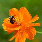 Rhapsody in Orange by Renee Blake