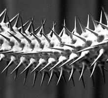 Thorns b&w by elasita
