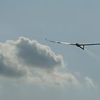 Gliding  by sandyprints