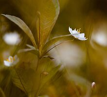White on green by Alina Uritskaya