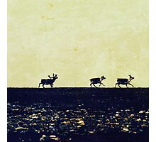 Reindeer chase Photographic Print