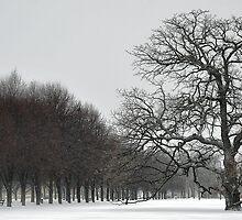 Blizzard 2011 - SnowZone by Charles Dastodd
