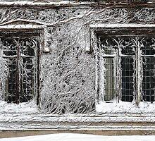 Blizzard 2011 - Snowmaggedon by Charles Dastodd