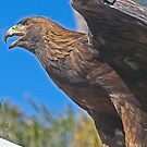 """Golden Eagle.. (Formerly known as """"Falcon!!"""")  by Heather Friedman"""