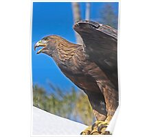 "Golden Eagle.. (Formerly known as ""Falcon!!"")  Poster"
