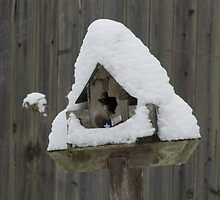 Lone Star Bird House by tmarie1