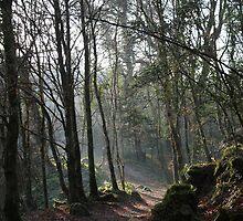 Woodland walk by Kevin  Carlin