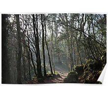 Woodland walk Poster