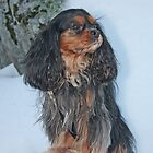 I Stand Tall ~ Cavalier King Charles Spaniel by daphsam