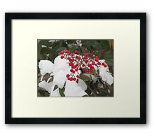 Snow Covered Nandina Bush - 3 Framed Print