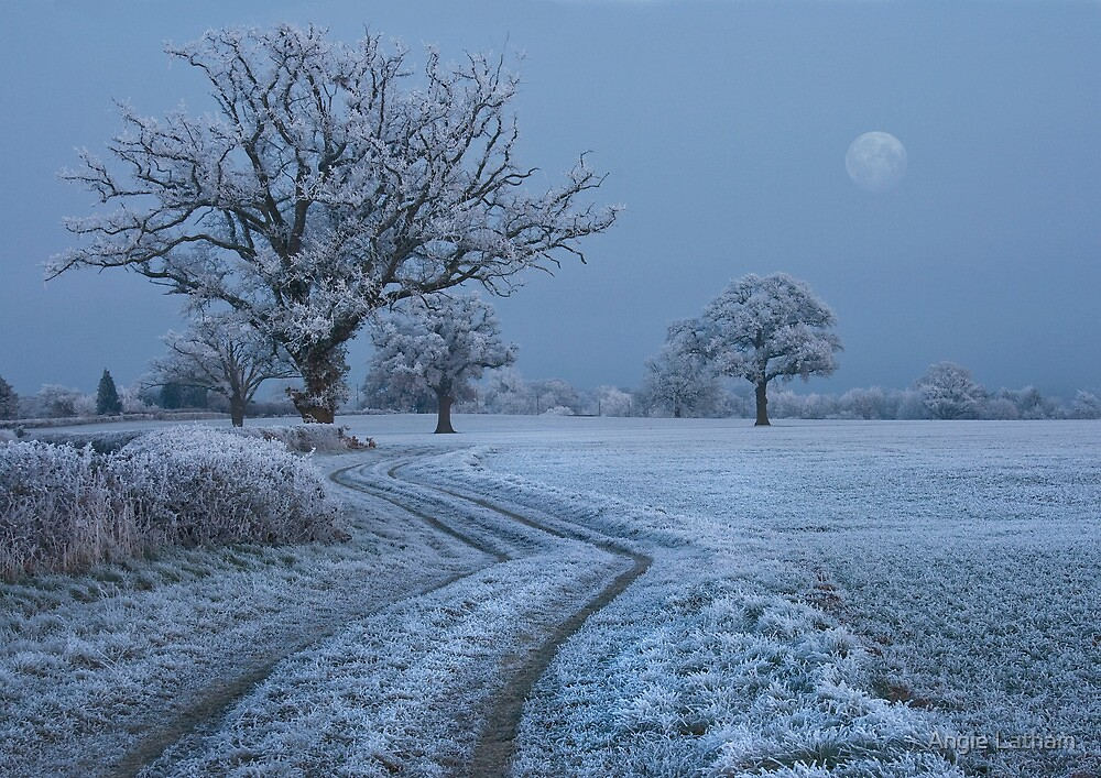 Frost Moon by Angie Latham