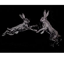 Mad as a March Hare Photographic Print