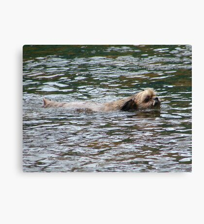 Doggy Paddle? What's That? Canvas Print