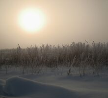 Foggy winter sunrise by vippy