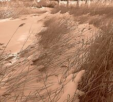 Sepia River Reeds in the Winter Snow by Margie Avellino