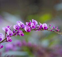 Purple Beauty by patcheah