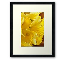 Daffodils, As Is Framed Print