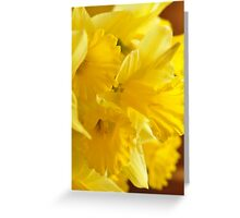 Daffodils, As Is Greeting Card