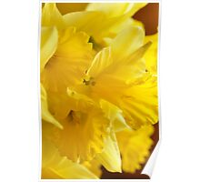 Daffodils, As Is Poster