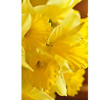 Daffodils, As Is Photographic Print