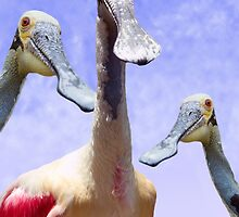 """Smiling Spoons"" - roseate spoonbills by John Hartung"