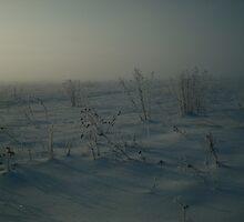Frozen by vippy