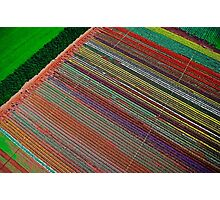 Tulip Table Cloth (Aerial view of tulip field) Photographic Print