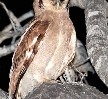 Verreaux's Eagle Owl by Michael  Moss