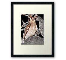 Verreaux's Eagle Owl Framed Print