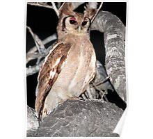 Verreaux's Eagle Owl Poster