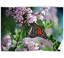 Monarch on the Lilacs Poster