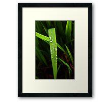 raindrops on grassblade Framed Print