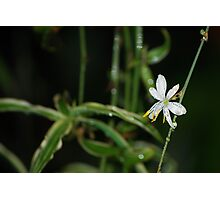 Spider plant after rain Photographic Print