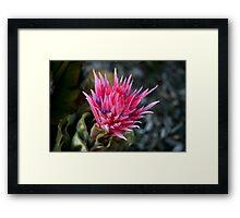 Pink Fury Framed Print