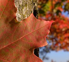 A Taste Of Fall by tmtphotography